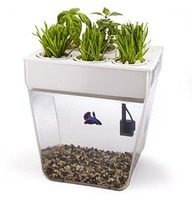 fish tank ecosystem gift for tweens